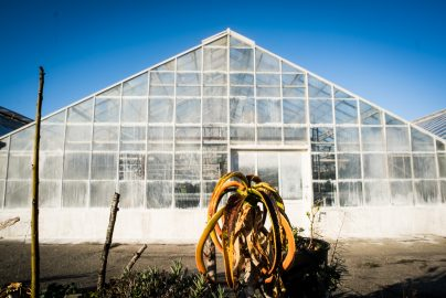 Green House in the Ornamental Horticulture garden at CCSF on Wednesday 23, 2016. Photo by Gabriela Reni/ The Guardsman.